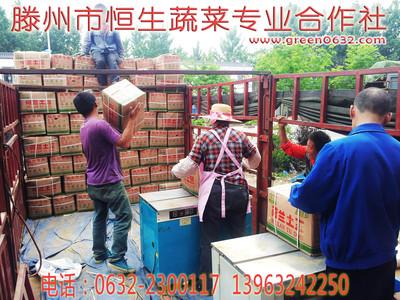 山东滕州大坞荷兰土豆产地价格