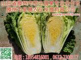 滕州黄心大白菜