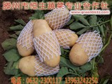 2017山东滕州大坞土豆最新价格