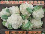 山东滕州优质花菜/菜花