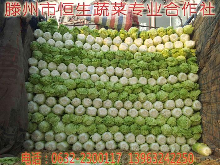 大白菜价格