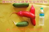 山东滕州优质红绿萝卜