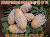 滕州土豆展示