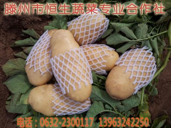 滕州土豆马铃薯